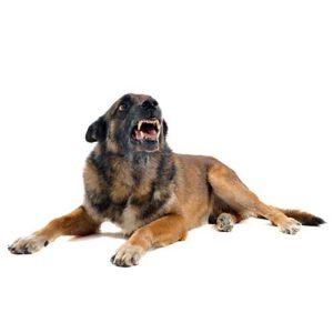 נשיכת כלב בעבודה ותוצאותיה
